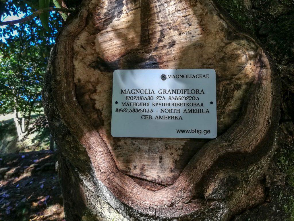 Σε κάθε δέντρο/φυτό υπήρχε και μια ταμπέλα με την ονομασία του
