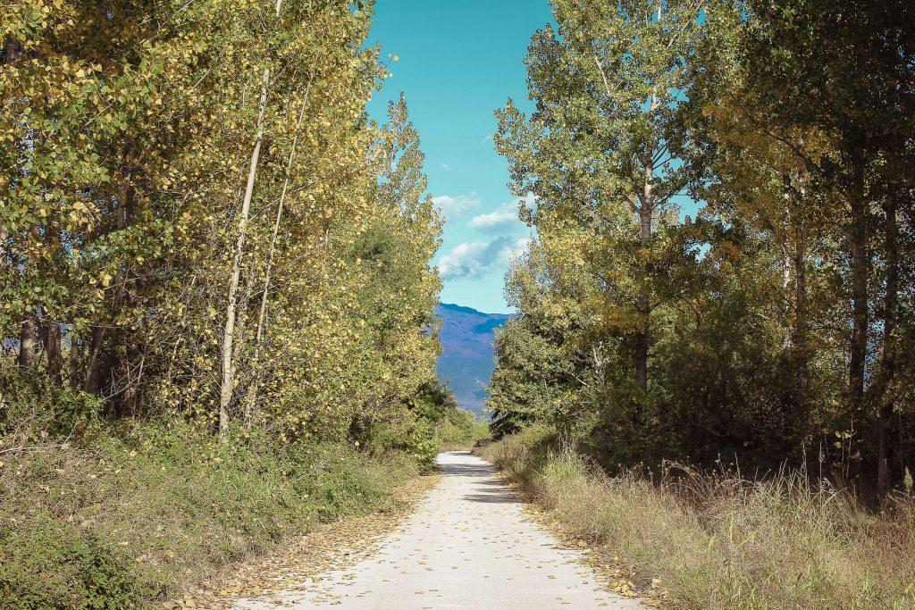 Περπατώντας στα Χίλια Δέντρα