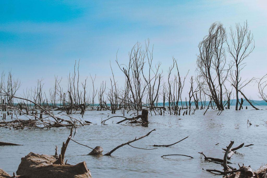 Κλασικό τοπίο στα Χίλια Δέντρα